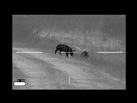 Grendel Federal Fusion - Lost Hog