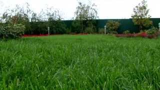 Как ухаживать за газоном осенью. Часть 1.(Поздней осенью газону необходимо уделить особое внимание - правильно ухаживая за ним в это время года, мы..., 2012-10-19T03:33:05.000Z)