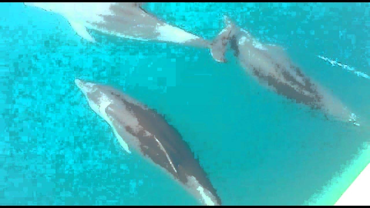 Дельфины видео плавают в открытом море - YouTube