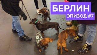 Приключения собачки Зины и ее друзей в Берлине