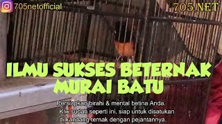 Betina Birahi & Fighter Syarat Utama Keberhasilan Ternak