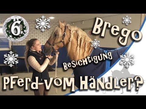 Tür 6: Pferd vom Händler kaufen? Ich schaue mir Brego an