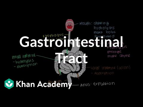 Meet the gastrointestinal tract! | Gastrointestinal system p