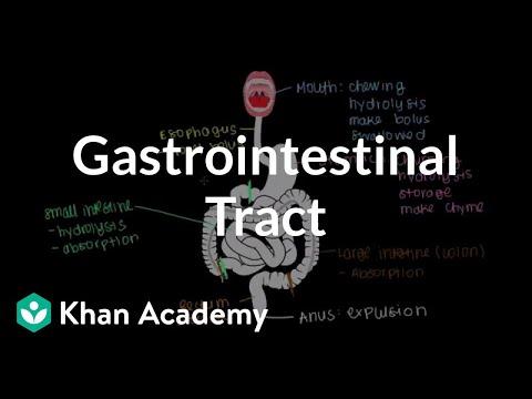 Meet the gastrointestinal tract! | Gastrointestinal system physiology | NCLEX-RN | Khan Academy