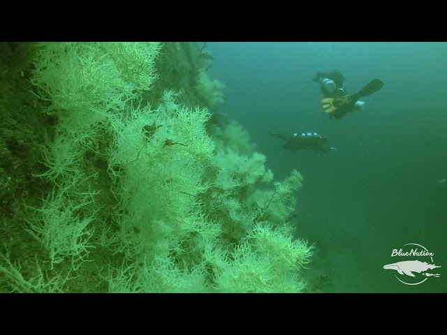 Diving Emerald Abyss in Loreto, Mexico.