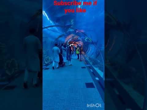 dubai fish aquarium | dubai mall biggest aquarium of the world | underwater zoo