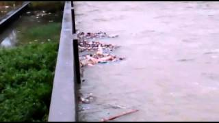 human deadbody bad situation in canal water