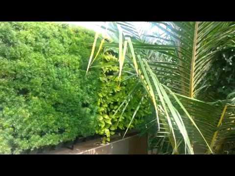 Natural Green Walls by Green Wall Nursery, Nashik