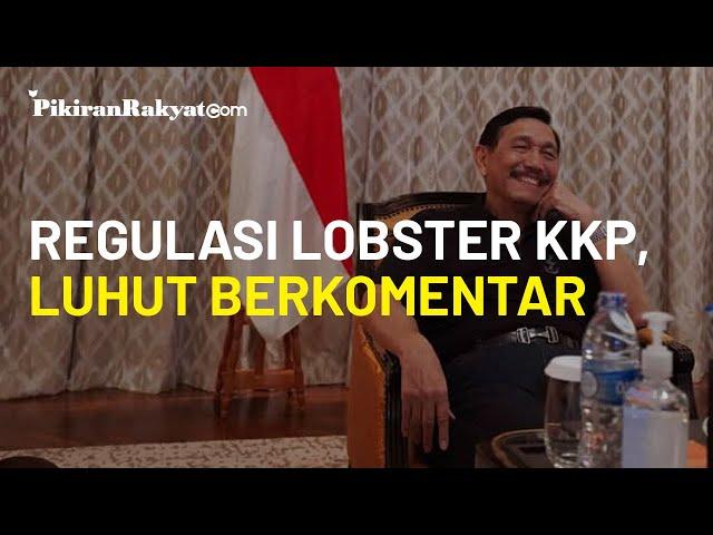 Terkait Regulasi Benih Lobster di KKP, Luhut: Tidak Ada yang Salah