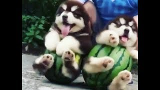 💖cute dogs and cats doing funny things compilation 2018 #14💖
