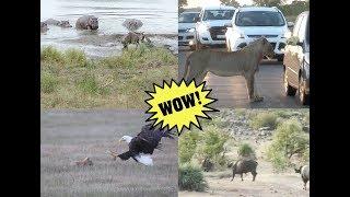Опасный мир животных. Подборка.