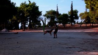 Basic Obedience With Young German Shepherd Without Leash, Dog Training