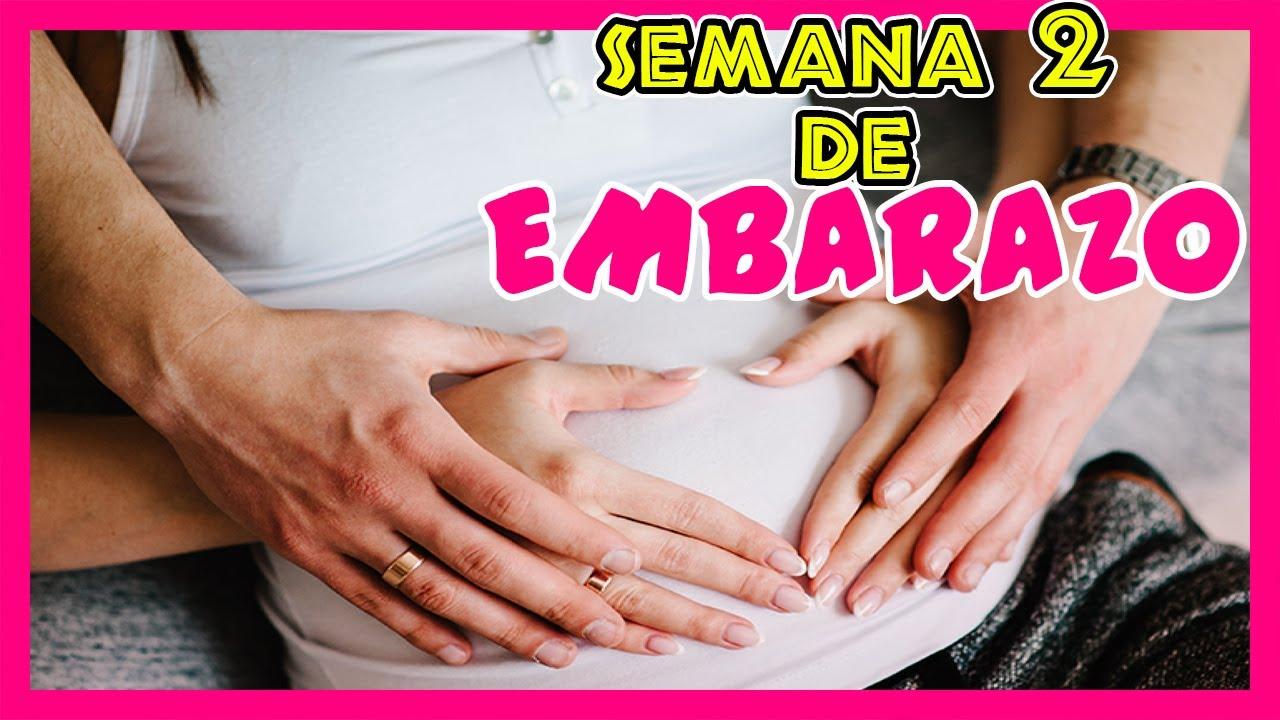 Semana 2 de embarazo | Primer mes de embarazo