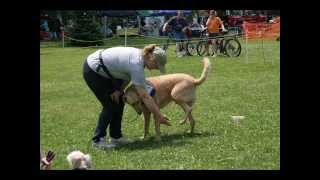 Dog Day In The Park 2011.wmv