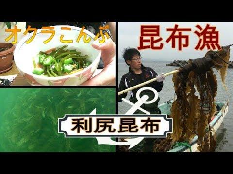 昆布漁刺身コンブ・オクラこんぶ作って食べると美味しい利尻昆布 kombu 53