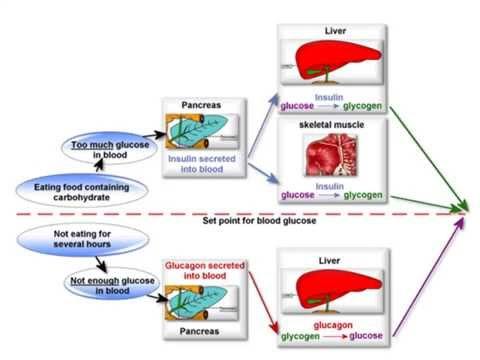 blood sugar glucagon produced by which gland