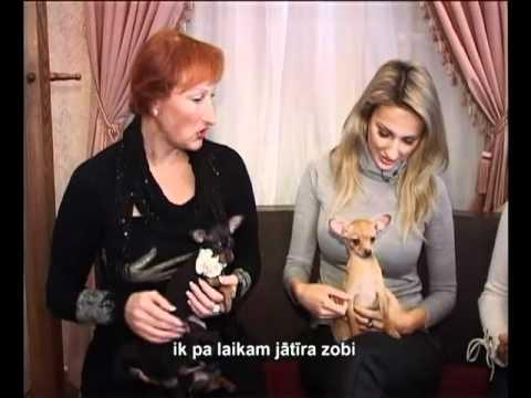 Вопрос: Сколько зубов у собаки породы русский той?