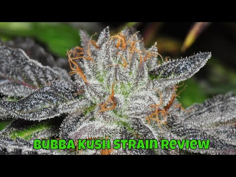 Cannabis Review Bubba Kush Strain Review