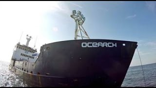 Tagging Sharks with OCEARCH