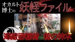 オカルト博士の妖怪ファイル  澤蔵司稲荷  椋の神木