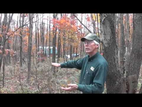 I Invited The DCNR County Forester Over To Talk About Land M
