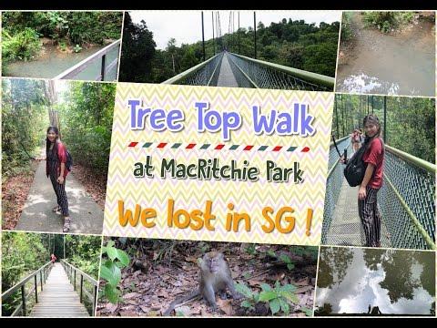 Tree Top Walk at Singapore