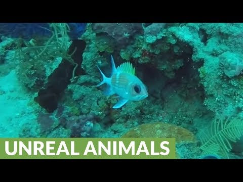 Divers investigate deadly scorpionfish & other amazing sea creatures