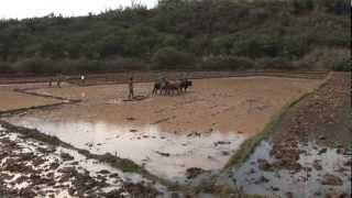 AVSF - Réponses paysannes aux changements climatiques