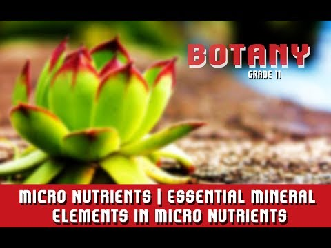 Micro Nutrients | Essential Mineral Elements In Micro Nutrients | Section 4