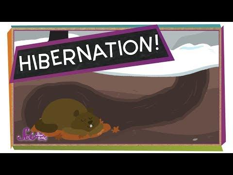 Getting Ready for Hibernation!