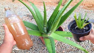 Adubo Caseiro – Qualquer Planta Desenvolve com esse Adubo