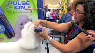 Diane Betelak Demo On Grooming A Poodle's Face