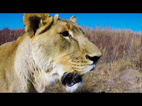 This Boggles My Mind #ASKMEG | The Lion Whisperer