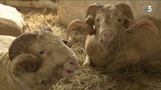 SERIE  L'agriculture de demain (1/4) - La bergerie de Louis XVI