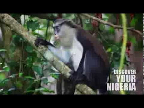 Domestic Tourism in Nigeria