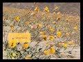 Miniature de la vidéo de la chanson Search For Life