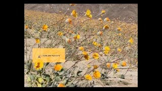 Dirty Projectors - Search For Life (Official Lyric Video) YouTube Videos