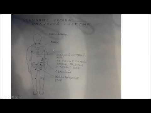 Анафилактический шок (анафилаксия). Иммунология, аллергология