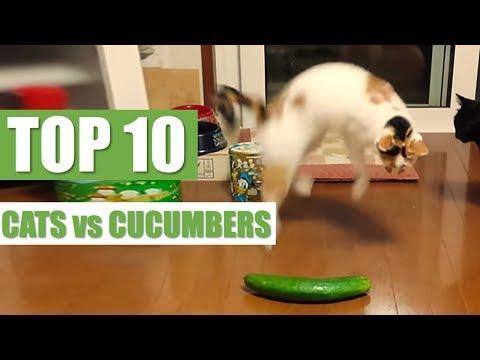 TOP 10 CATS