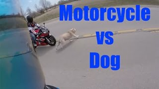 MOTORCYCLE VS DOG ACCIDENT! NEAR DEATH! I WAS ON THIS RIDE!