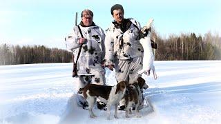Охота на зайца с Эстонскими гончими это не собаки а клещи какие то