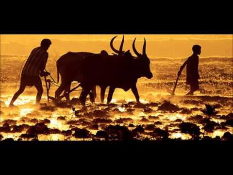Tamil farmer songsupporting jallikattu