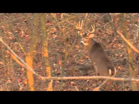 Jeremy's Pike County Whitetail Deer Hunt - Eagle Lakes Outfitters