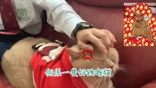 Publication Date: 2020-12-22 | Video Title: 萬鈞匯知中學─ 義工點點心意暖萬家(一)