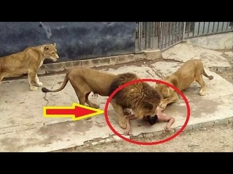5 People who Fell into Animal Enclosures at Zoos
