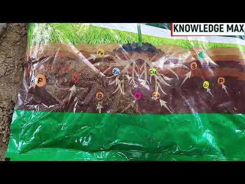 BIO Fertilizer Kya Hota Hai   बायो फ़र्टिलाइज़र क्या होता है