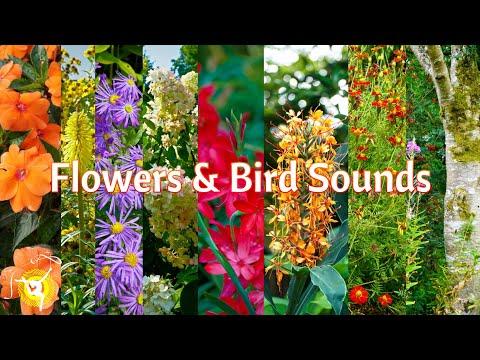 Relaxing Flowers & Sounds Of Birds - Garden 1 - Relaxation 4K Ultra HD Video