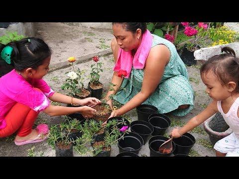 Vlog Menanam Bunga Mawar - balita lucu membatu menanam - kids planting flowers