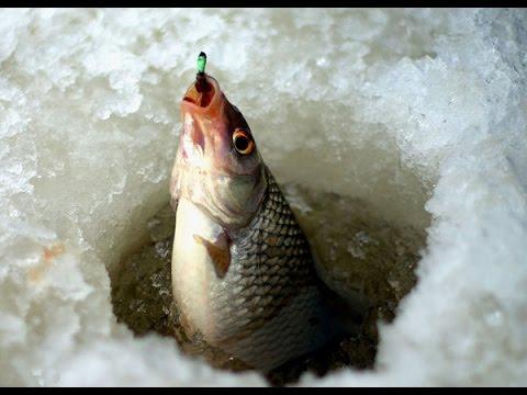 зимняя рыбалка для начинающих ловля плотвы