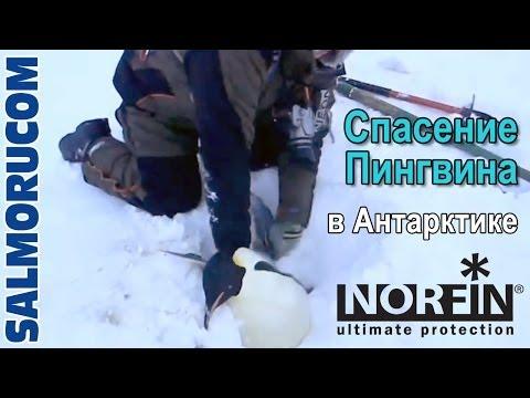 Спасение пингвина в Антарктике